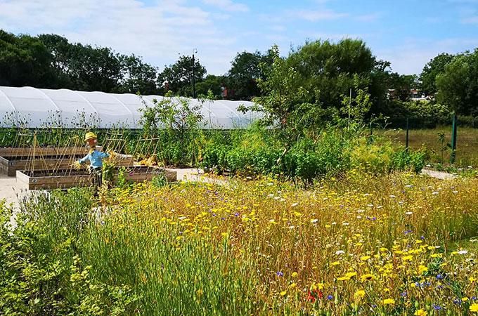 wild flower garden @thegrange blackpool